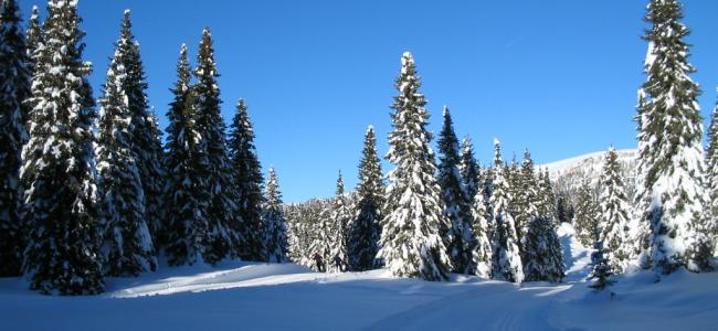 50+13 TROFEO del BARBA di sci nordico - 6 febbraio 2021 - CLASSIFICHE
